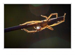spider -macro